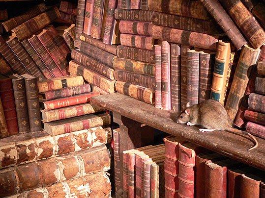 ratdebibliothque.jpg